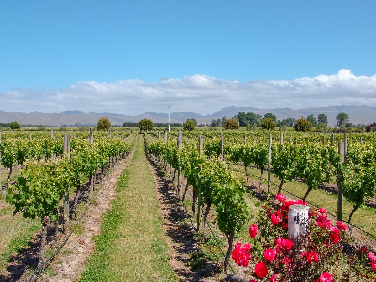 Barossa Valley Getaways