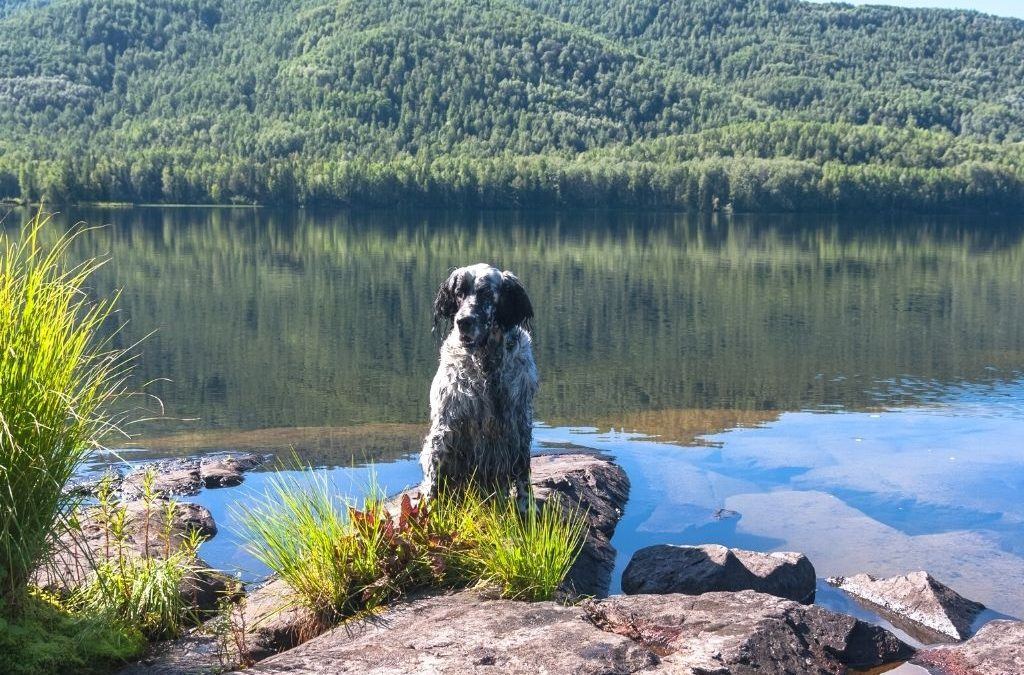 Pet-friendly accommodation Tasmania