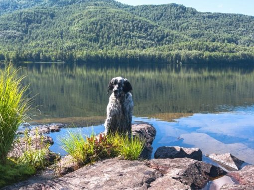 pet friendly accommodation australia