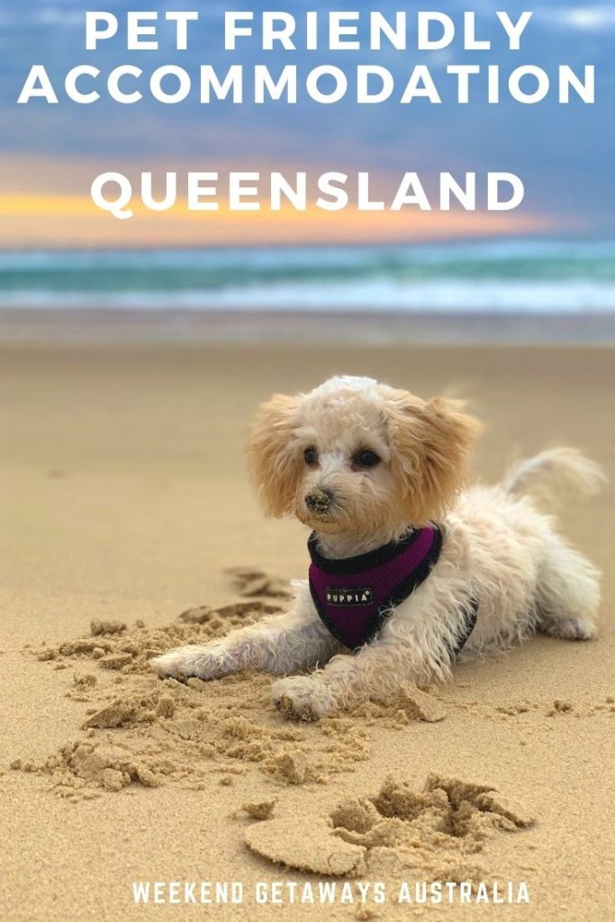 pet friendly qld