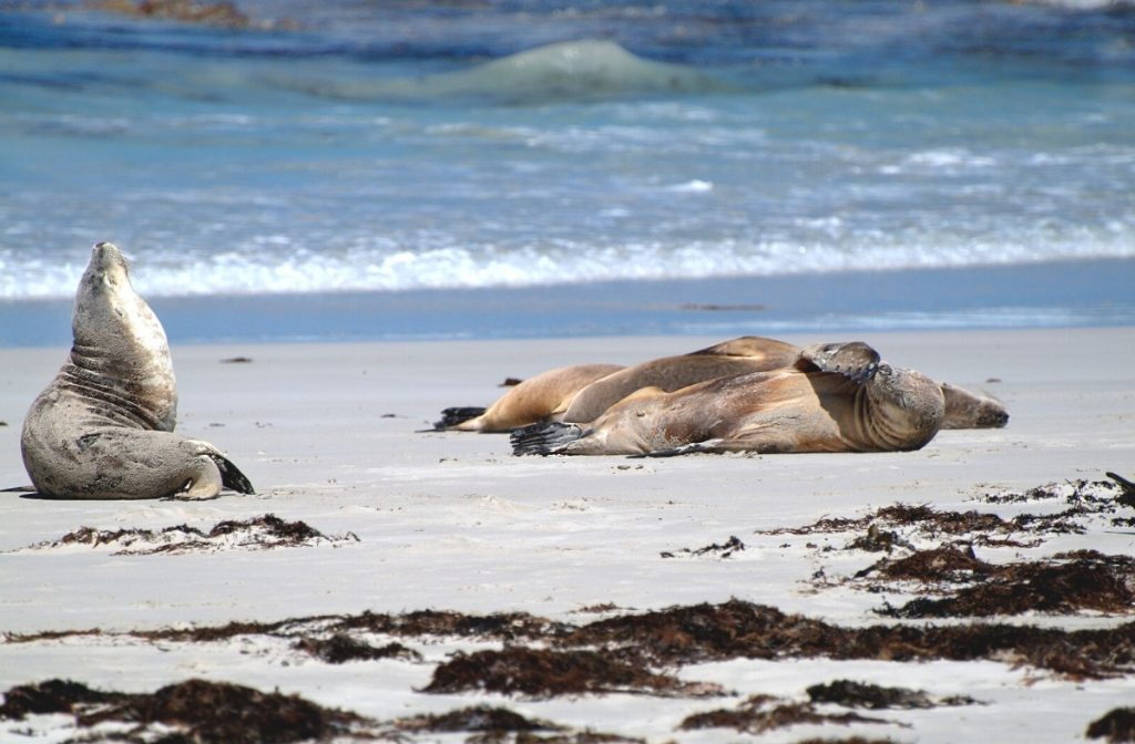kangaroo island holiday
