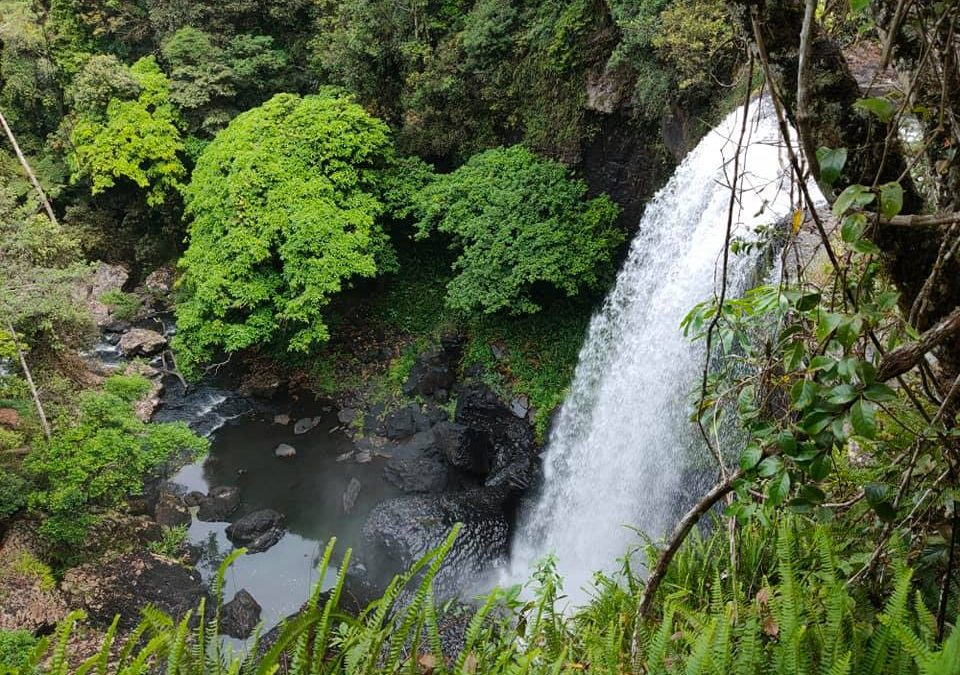 Atherton Tablelands Waterfalls