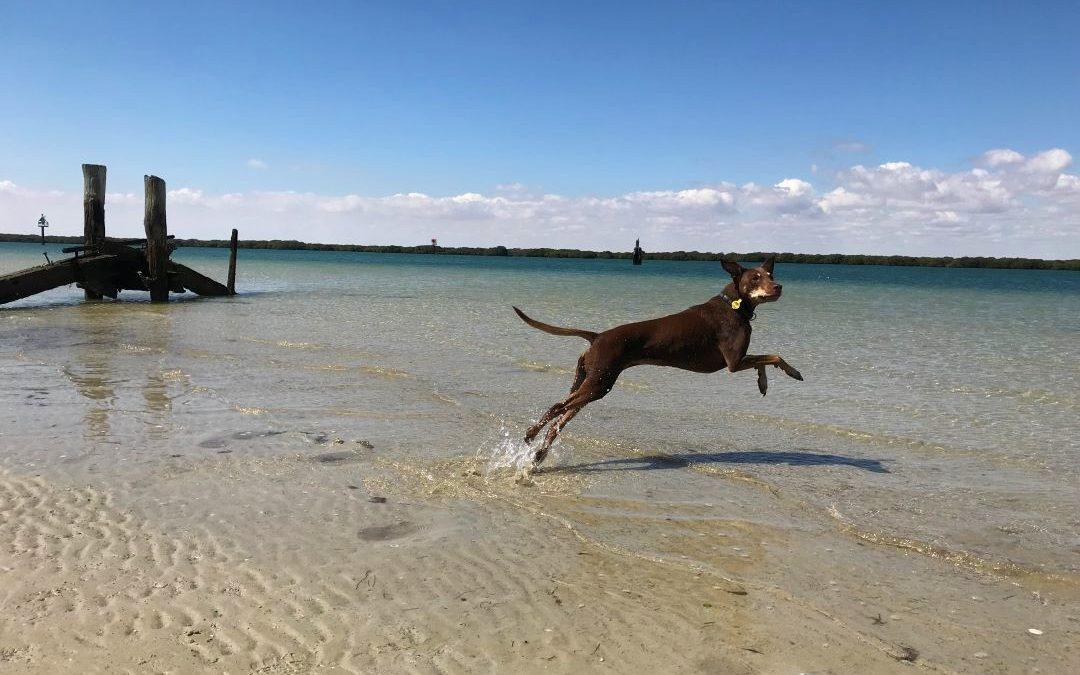 Pet friendly accommodation South Australia