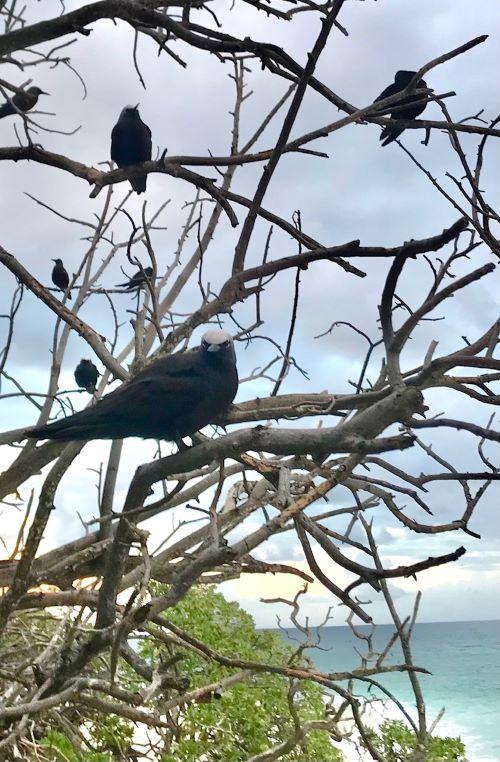 birds of wilson island