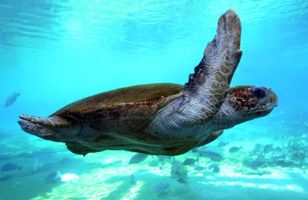 Weekend Getaways to the Southern Great Barrier Reef – Wilson Island