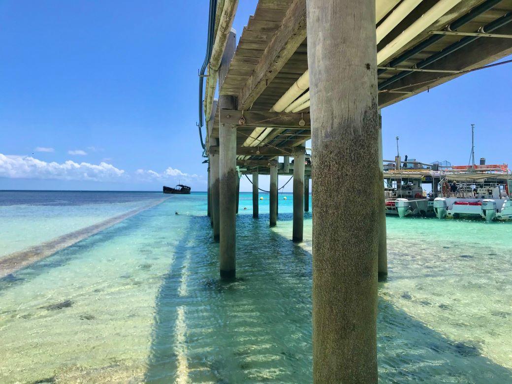 heron island review